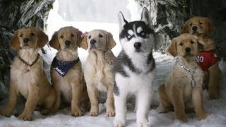 Snow Buddies (HBO)