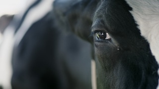 Vaca (HBO)