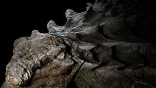 World's Best Dinosaur Fossil