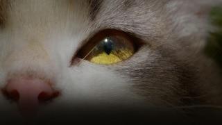 Kittenhood