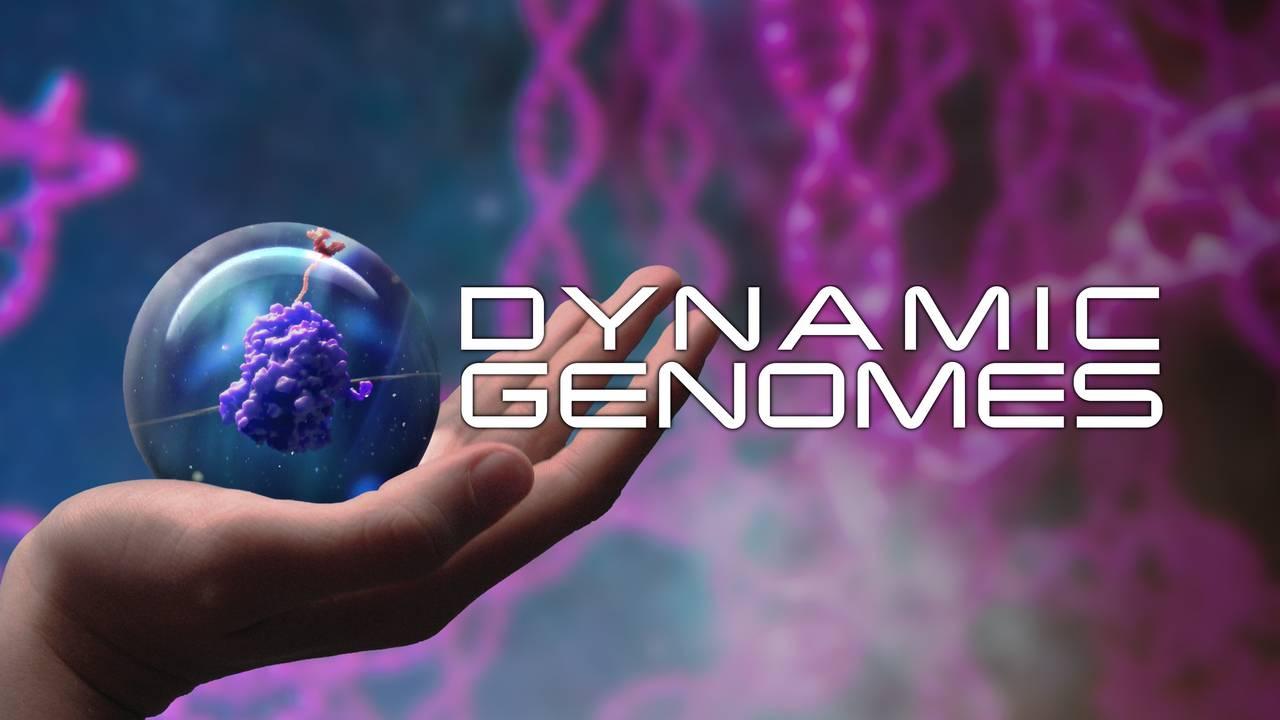 Dynamic Genomes