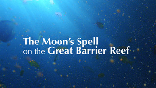 The Moon's Spell On The Great Ba