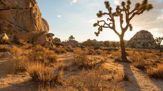 Joshua Tree: A Climber's Paradise