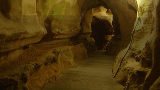 Mammoth Cave: All About the Bats