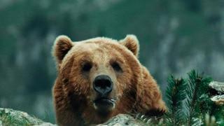 The Bear (HBO)