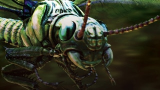 What Killed The Giant Insects?