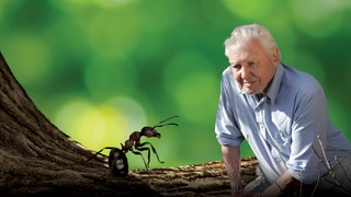 David Attenborough's Ant Mounta
