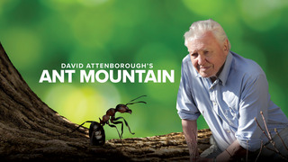 David Attenborough's Ant Mounta