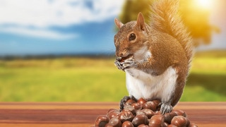 Going Nuts: Tales from Squirrel