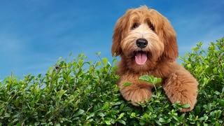 The Dog House: UK